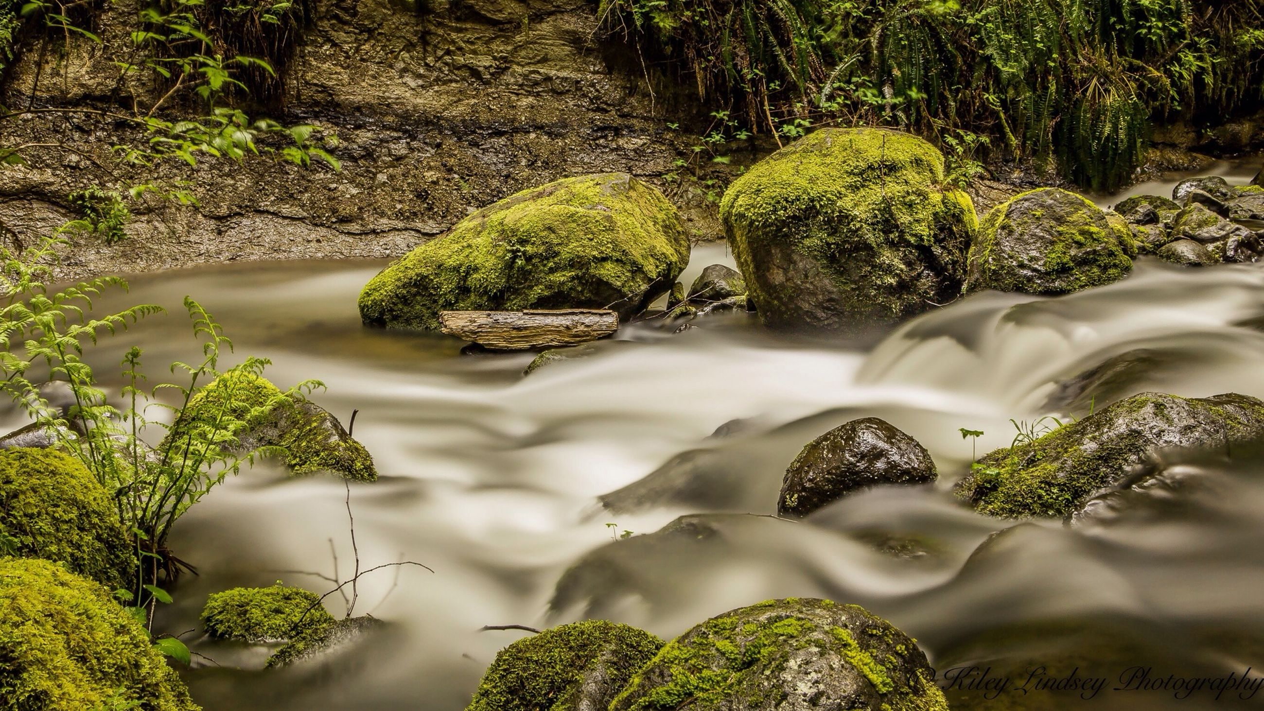 water, plant, nature, growth, green color, rock - object, high angle view, moss, forest, beauty in nature, leaf, tranquility, stream, outdoors, day, tree, no people, flowing water, close-up, sunlight