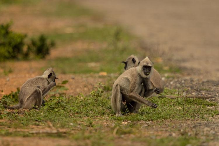 Monkeys sitting on land