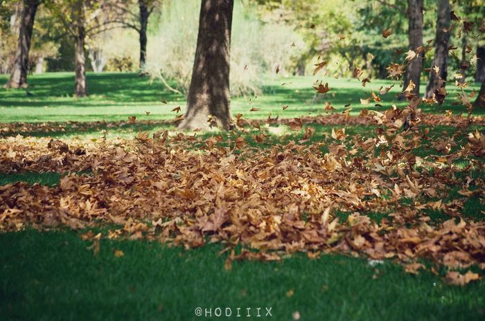 Art Mothernature Fall Fall_collection Happyfall Streetphotography