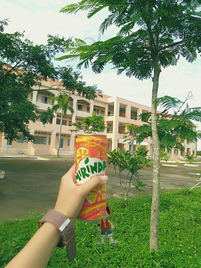 Khi tôi còn là học sibh, my school!