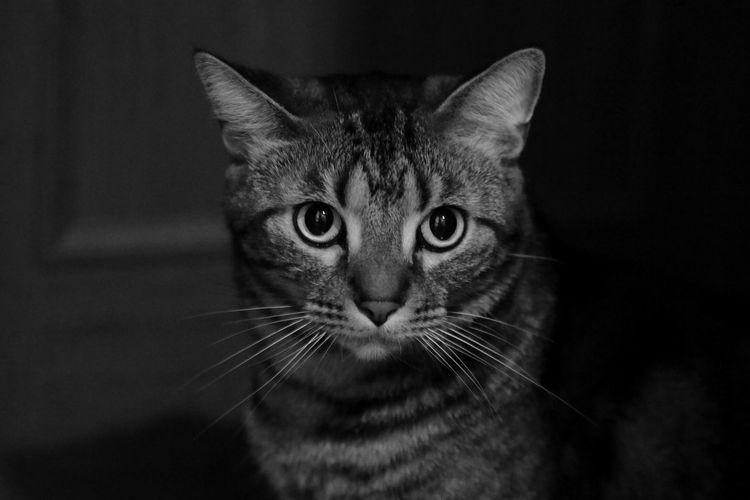 ポートニャート Cat