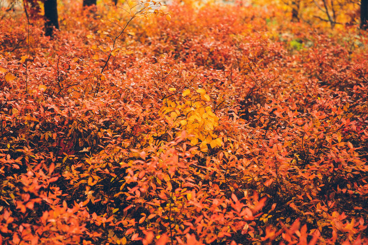 Autumn Autumn Autumn Colors Autumn Leaves Backgrounds Beauty In Nature Change Close-up Day Fall Fall Beauty Fall Colors Fall Leaves Flower Flower Head Fragility Freshness Full Frame Growth Leaf Nature No People Orange Color Outdoors