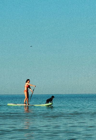 Dog in the sea Dog Paddlesurf Sea Summer Beach Blue Animals Sports Summerdogs Water Go Higher