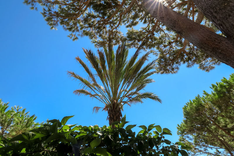 Mediterranean  Beauty In Nature Blue Branch Clear Sky Day Green Color Growth Leaf Low Angle View Nature No People Outdoors Palm Leaf Plant Plant Part Scenics - Nature Sky Sunlight Tranquil Scene Tranquility Tree