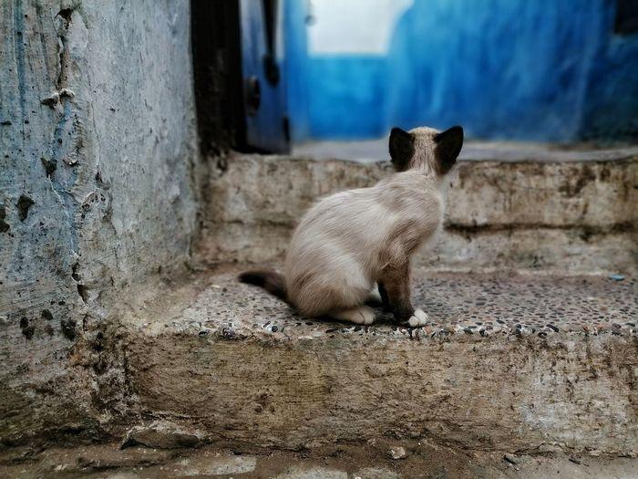 Kitten 😺 Pets
