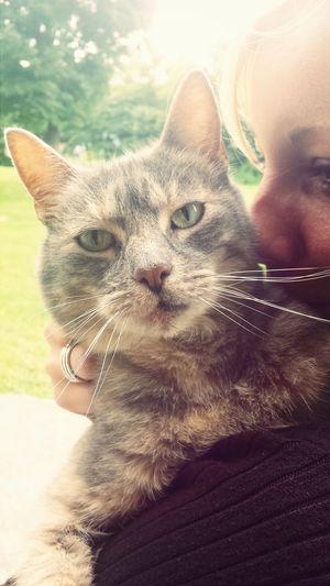 Animal Love Cats Catoftheday