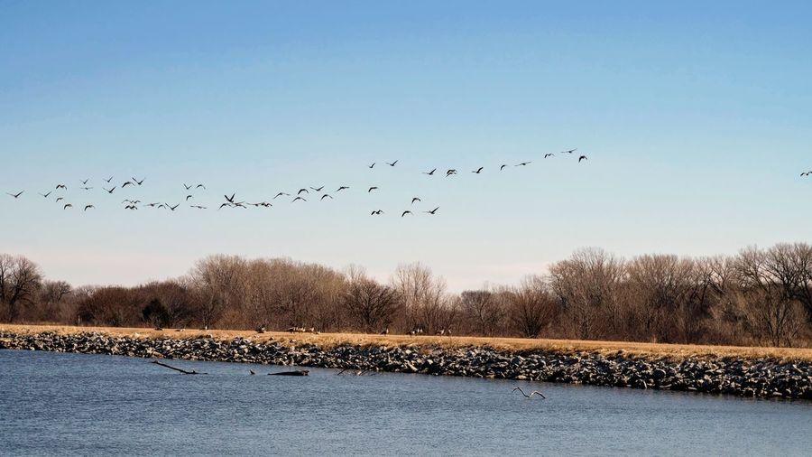 Birds flying over trees against sky