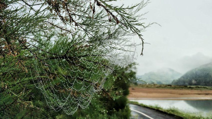 Bizkaia La Arena Euskalherria Plant Nature Tree No People Water Growth Day