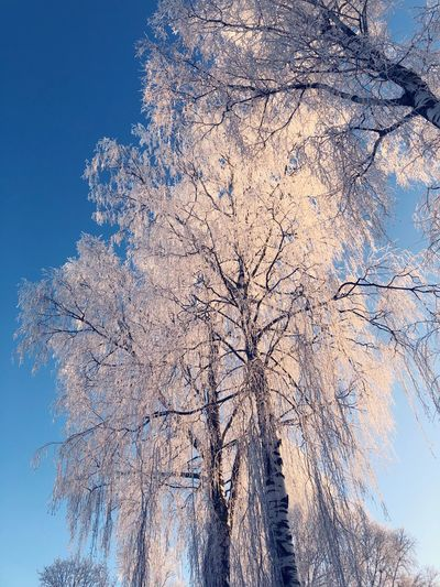 Cold Nature Tree Beauty In Nature Winter