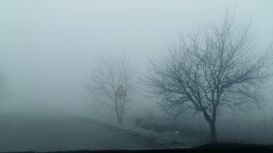Winter Morning Fog Foggy Morning Snowy Trees Road Slavonski Brod
