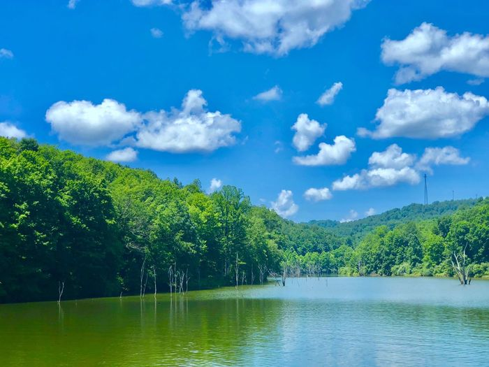 Lake Sky Water Cloud - Sky Tree Plant Beauty In Nature Scenics - Nature Tranquility Lake Tranquil Scene Green Color No People Reflection Nature Day Non-urban Scene Growth Idyllic Waterfront