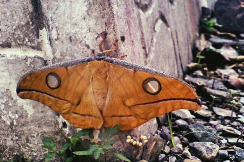 Close-up Nature Photosfromindia EyeEm Vision Magazine Publish EyeEmNewHere Indianphotographer Mobilephoto Indiapictures Travel Destinations Butterfly Sonyericsson
