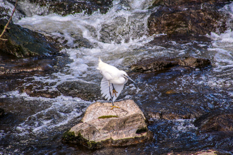 View of bird on rock in river