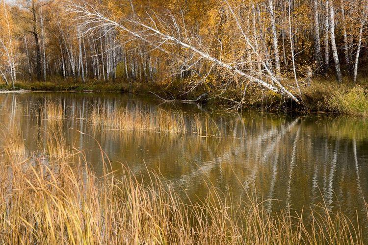 Trees Landscape осень Autumn Colors Nature Autumn Landscape_Collection Water Reflections Siberia