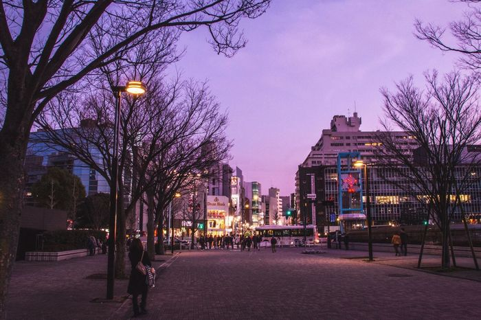 Pastel Night View Going The Distance Urban Lifestyle Everybodystreet Learn & Shoot: Layering Night Lights Street Photography Violet By Motorola Trees