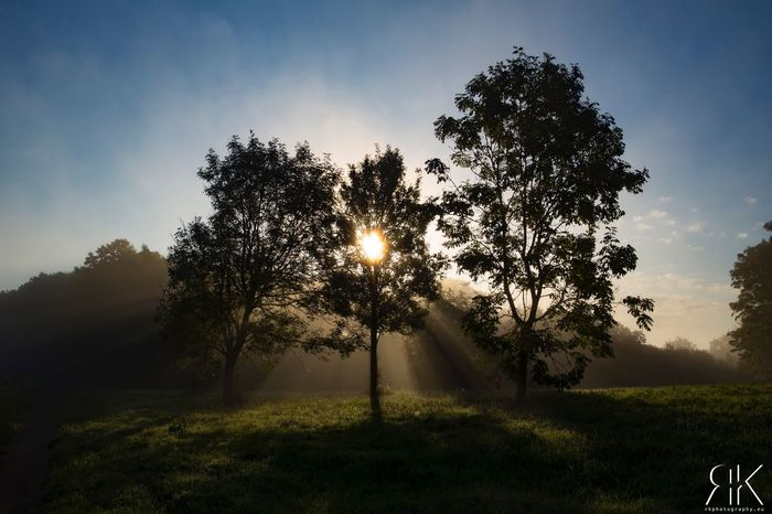 Misty morning... Winsum LandscapeTree Sun Tranquil Scene Sunlight Tranquility Beauty In Nature Sunlight Canonphotography Sunset Grass Landscape Scenics Growth Nature Beauty In Nature Sunbeam Field Sky Non-urban Scene Sunrise - Dawn Outdoors Day Grassy