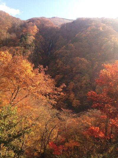 信州 高山村 松川渓谷 八滝展望台からの 紅葉🍁になります😄 japan nagano prefecture takayama matukawa valley yataki autumn leaves 日本の秋 fall of japan Fall Beauty Mountain Autumn EyeEm Best Shots EyeEm Nature Lover Nature Photography Amazing View EyeEm Best Shots - Nature EyeEm Best Edits Colors Of Autumn 高山村
