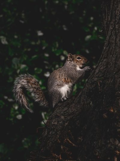 Nuts Fluffy Food Eating Nut Park Animal Wildlife Animal Animal Themes Animals In The Wild One Animal No People Tree Vertebrate Land Mammal Nature Day Outdoors Field Focus On Foreground Branch Side View Squirrel Close-up