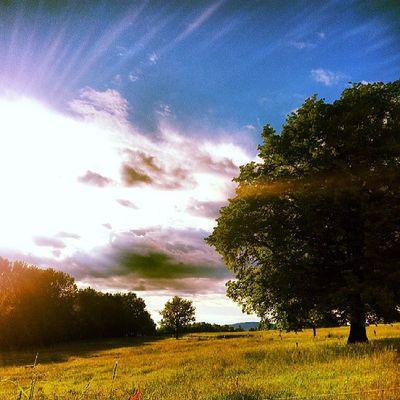 Sunlight Sunshine Summergram Natureshots perfect followme photooftheday