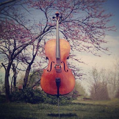 Cello time. hgc95 's cello. #gcs #spring #vivaldi #musicshot_wg #_wg #the_guild #cello #music #jj #jj_forum #bokeh #musician #instagood #earlybird #spring #art Art _wg Music Musicshot_wg Bokeh Vivaldi Spring Musicintheair Picoftheday Cellist Cello GCS Musician Earlybird Igers Jj  Instagood Jj_forum The_guild Primeshots Outside Igersmissouri