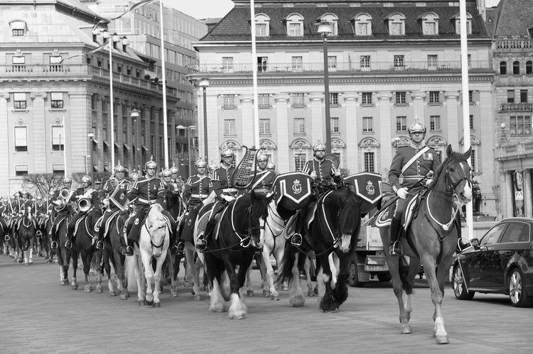 王の骑士卫队 Horse Large Group Of People People Stockholm, Sweden