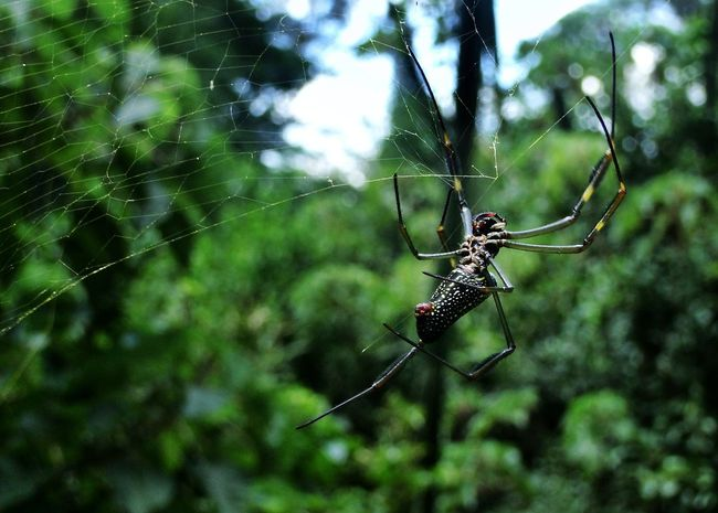 Spider Web Animal Themes One Animal Spider Focus On Foreground Insect Close-up Animals In The Wild Nature Web Fragility Outdoors Animal Wildlife Trapped Animal Leg Survival Intricacy No People Beauty In Nature Day Macro Photography Green Color Brazilian Nature