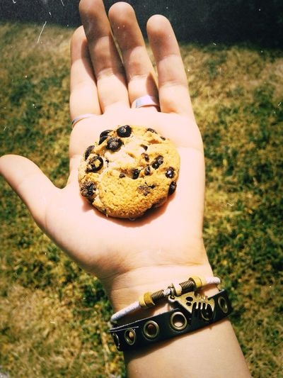 Cropped hand holding chocolate chip cookie