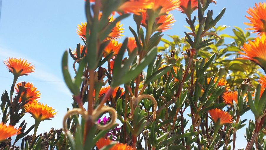 Growth Nature Beauty In Nature Orange ColorTree Plant Low Angle View Sky No People DayOutdoors Flower Fragility Palm Tree Freshness Leaf Orange Flower Orange
