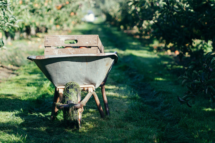 apple harvest #2 Apples EyeEm Best Shots EyeEm Nature Lover Getting Inspired Grass Harvest Harvest Time Nature No People Outdoors Plantage Wheelbarrow Lieblingsteil