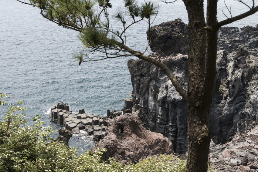 view of columnar joints (jusangjeolli) at Jungmun Tourism Complex in Jeju Island, South Korea Beauty In Nature Branch Cliff Columnar Joints Day JEJU ISLAND  Jungmun Tourism Complex Jusangjeolli Nature No People Outdoors Scenics Sea Sky Tranquility Tree Tree Trunk Water