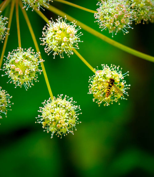 Beauty In Nature Close-up Day Flower Flower Head Inflorescence Insect Nature No People Outdoors Plant