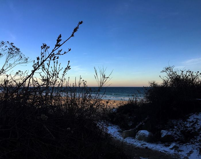 Marram Grass Sea Sky Horizon Over Water Nature Water Scenics Tranquility Beauty In Nature Outdoors Tranquil Scene Beach No People Tree Day High Angle View Rhode Island Sunlight Shadows & Lights Light And Shadow Snow My Year My View Adventure