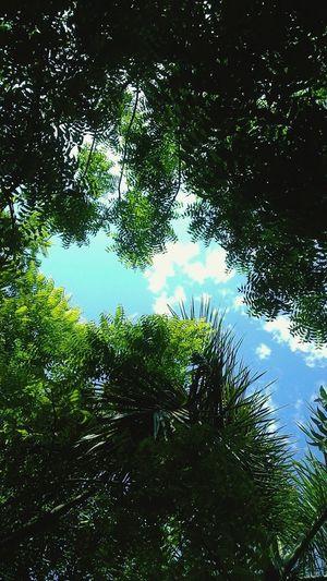 Sky Cloud Random_click Asus Between Trees All Green 🌴☁🌲
