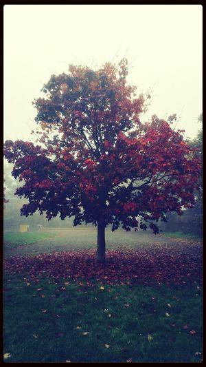London Autumn Nature Trees