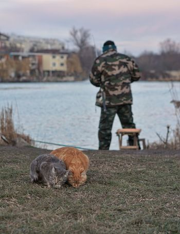 Animal Themes Domestic Animals Mammal Rear View Pets Nature Outdoors Fishermen Fishing Water Cats Adapted To The City
