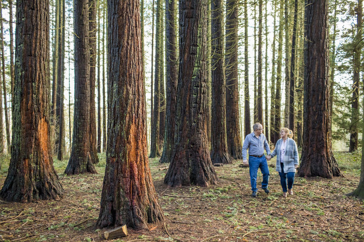 Panoramic view of man and woman in forest