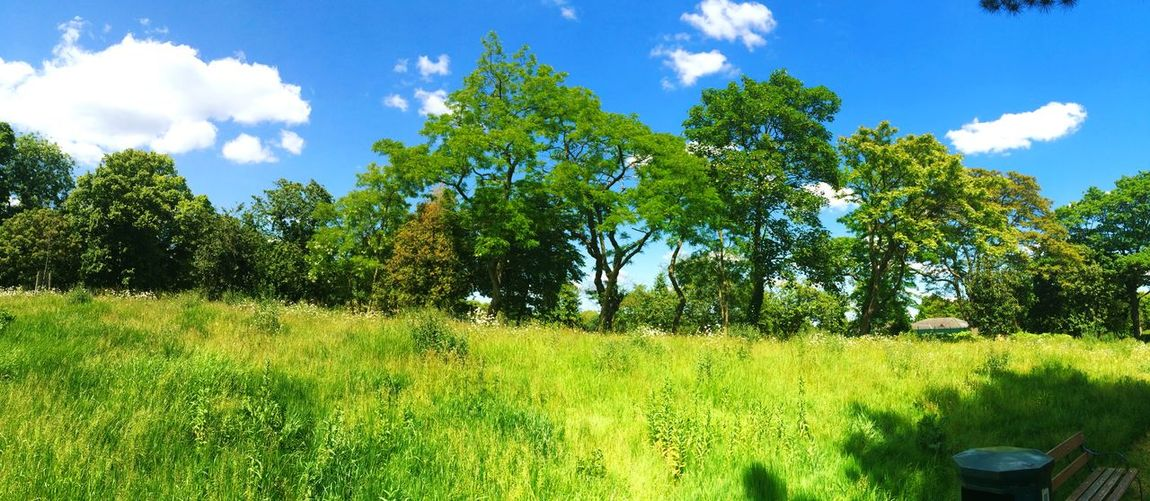 Nature On Your Doorstep Greengrass Parklife Vickypark London Home Sundayvibes Sunshine Summer