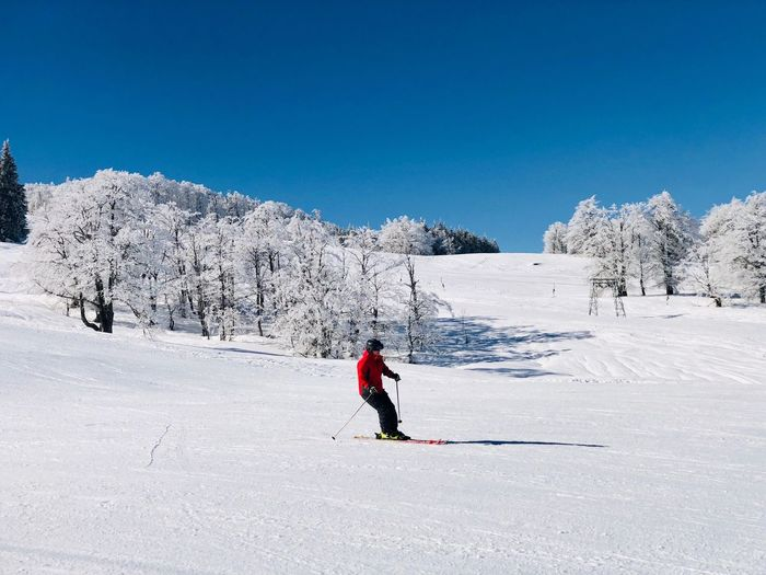 Skier going down the slope on a day with clear blue sky Landscape Activity Outdoors Frozen Trees Forest Sunlight Blue Sky Resort Motion Slope Skier Sport Snow Cold Temperature Winter Sport Winter Real People One Person Full Length Ski Holiday Sports Equipment Warm Clothing Ski-wear Skiing Leisure Activity Mountain Mountain Range Nature Day