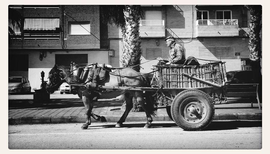 Blackandwhite Horse And Cart