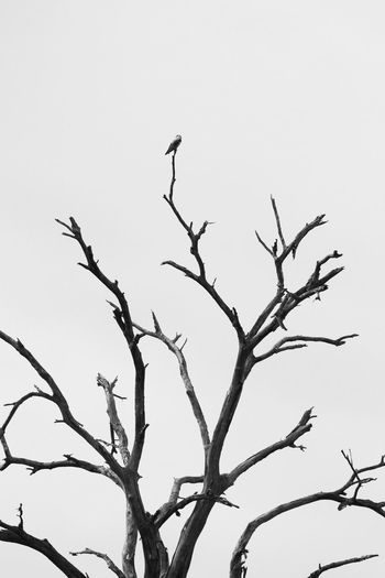 Low angle view of silhouette bird perching on tree
