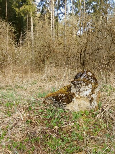 Was Siehst Du? What Do You See? Fels Felsblock Stone - Object Outdoors Stones Moos Stein Im Wald Forest Nature Natur Rock No People Forest Art Forestphotography Forest Photography Kurios Kurioses  Bq Stone Bqaquaris Tree EyeEm Best Shots - Nature