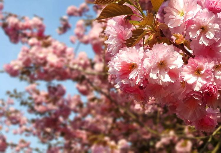 Flower Power Flowerporn Flowers Flowers_collection Flowers, Nature And Beauty Flowerlovers 🌹 Tisa Clark 🌹 Rosa Rosas🌹🌹 Nicospecial.de Nicospecial Flikr Treelovers Treetastic