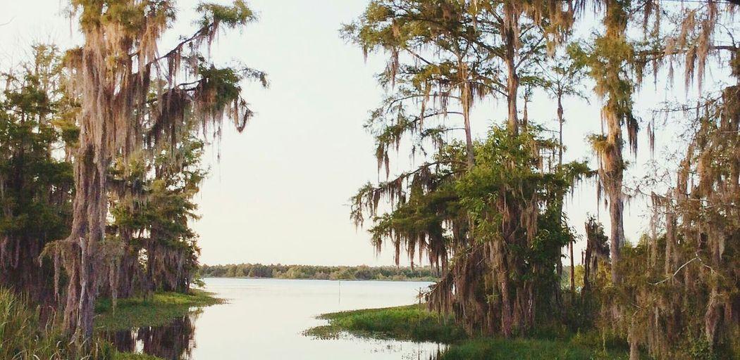 The Great Outdoors - 2015 EyeEm Awards Louisiana Swamp