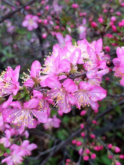 Millennial Pink Pink Flowers Seol Street Photography