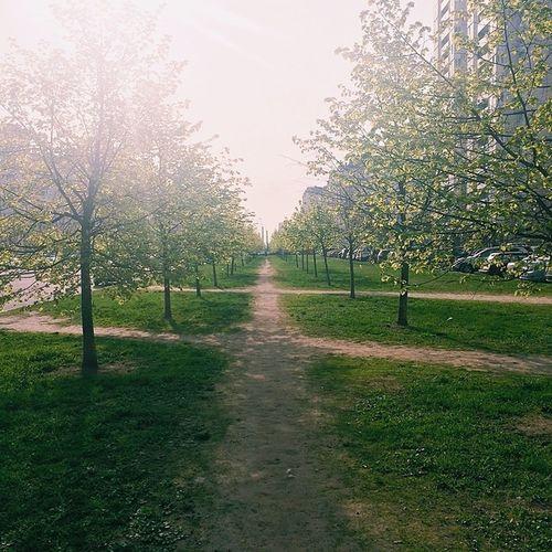 Замечательная утренняя прогулка с собакой бодрит.) май прогулка утро Питер