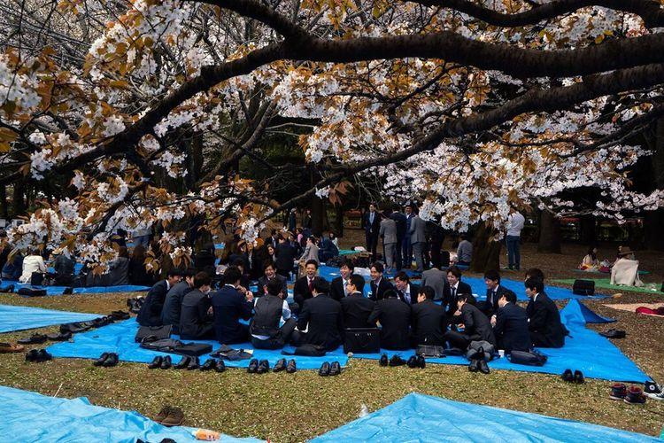 Urban Spring Fever Japan Tokyo Sakura Telling Stories Differently