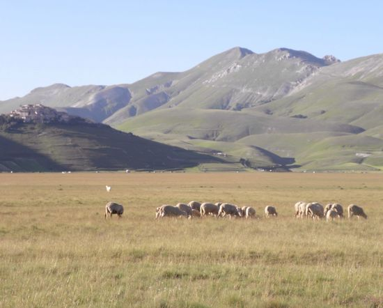 Landscape Grass Mountain Field Nature Tranquility Domestic Animals Animal Themes Mammal Clear Sky Grazing Livestock Beauty In Nature Scenics Tranquil Scene No People Outdoors Sky Day Pasture Sheep Miles Away Castelluccio Di Norcia Sibillini Plateau