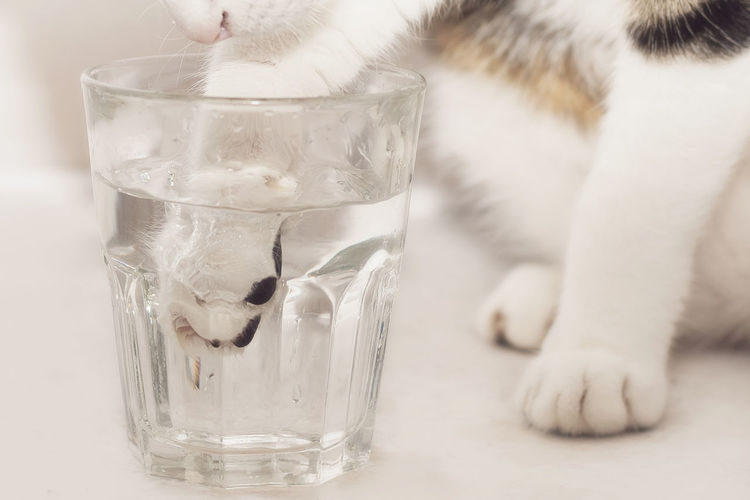 Cat putting paw in glass of water