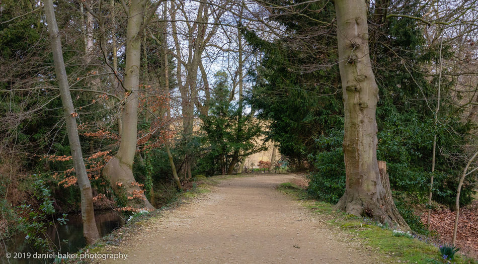 Tree Footpath Tranquility WoodLand Non-urban Scene Diminishing Perspective No People Outdoors