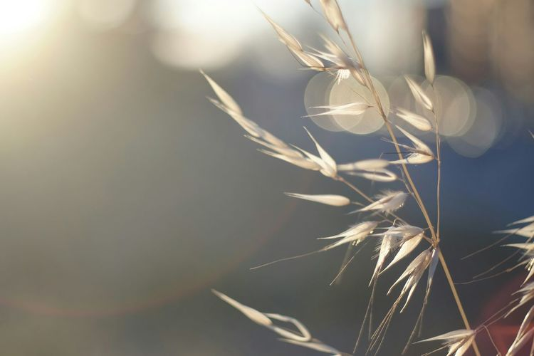 Close-Up View Of Grass Straw